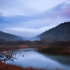 Waddell creek, Santa Cruz. by garyfoto