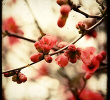 Red Blossom by Marc Loret