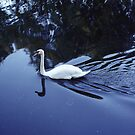 Swan at Nature Reserve Wandsworth,  Photography by Streetpages