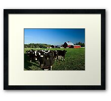 Dairy Cattle and Red Barn Framed Print