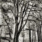 Tree of Life...  by Piskins72
