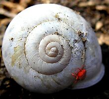 Mite-E-Snail (1st Red Mite for the year) by Carla Wick/Jandelle Petters