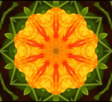 Nasturtiums 10 by EclecticImages