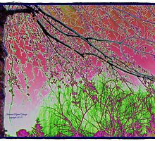 Beautiful Trees on a Dreary Day by EclecticImages