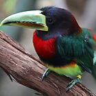 i am not toucan sam by tony  babcock