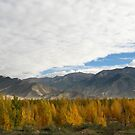 Tibet Autumn by L- M-K