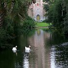 Swans floating in the Reflection Pond at Bok Tower Sanctuary Florida by Rick Short