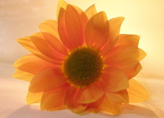 Kaleidoscope Orange by mikequigley