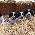 Puppies in a line by Caity Sleeman