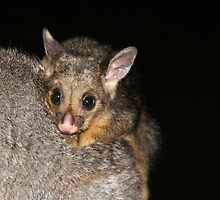 Possum magic (with apologies to Mem Fox) by Denzil