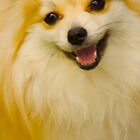 Happy Pomeranian, Cute Dog by Ray Schiel