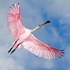 Roseate Spoonbill by Tomas Abreu