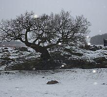 Winter wonderland by Eleanor Whibley
