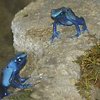 Poison Dart Frogs by Lori Hark