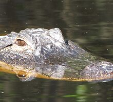 Gator on the Hunt by Lori Hark