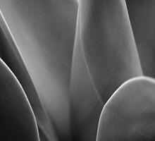 Cactus 1 by fflleeee