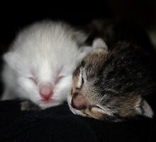 Day Old Kittens by tuffcookie