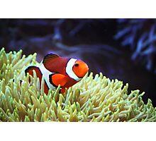 """Nemo, where are you?"" Photographic Print"