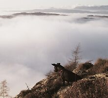 A Dog Above The Clouds by Jamie  Green