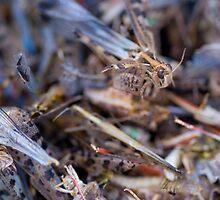 Swarm by Darren Wright