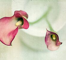 Callies by Rebecca Cozart