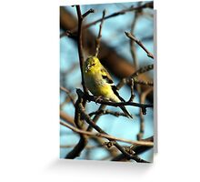 American Goldfinch Eating Greeting Card
