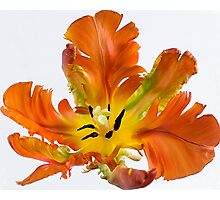 Colours of Spring Photographic Print