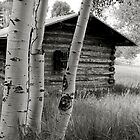Aspens With Cabin by lensmatter