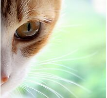 Golden Whiskers Photographic Print