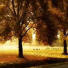 Geese in the Park by Tracy Riddell