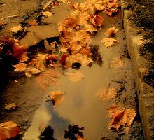 Auburn Rain by Melissa Park
