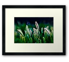out of blur wheat Framed Print