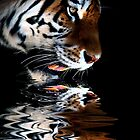 Tiger - Dipping Reflection Series by Jan Szymczuk