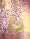Wisteria Heaven by Suzanne Cummings