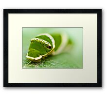 Before The Butterfly 2 Framed Print