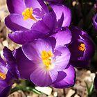 Spring is Calling by Bellavista2