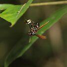 Bolivian Rainforest: Wasp by tpfmiller