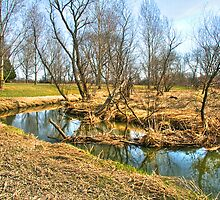Meandering Creek by ECH52