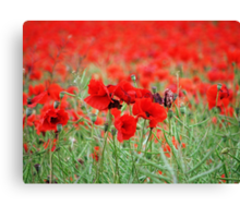 The Red Blanket Canvas Print