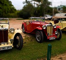 Three MG TCs by Paul Gilbert
