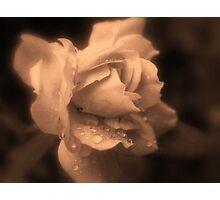 Monochrone Rose Photographic Print
