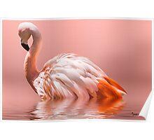 Flamingo-2010 Poster