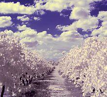 Vanishing Vines by Andrew Dickman