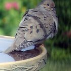Cooling One's Tail Feathers by kkphoto1