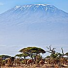 Kilimanjaro Elephants - Amboseli National Park, Kenya by Scott Ward