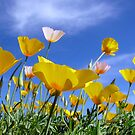 Poppies and Blue Arizona Sky by Lucinda Walter