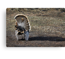 Just Me and My Shadow, Wild Turkey Style Canvas Print