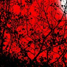 Black Limbs in the Red of Night by MrJakk