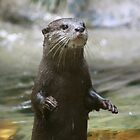 Otter Impersonating a Meerkat by smallan
