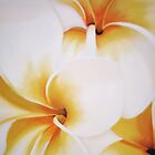 &quot;White frangipani&quot;   by Taniakay